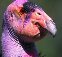 13 самых уродливых животных на планете