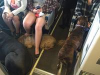 Канадские авиакомпании нарушили свои правила, чтобы спасти животных