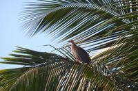 Фестиваль птиц в солнечной Гамбии