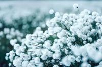 14 теплых снимков о том, как выглядит лето в холодной Финляндии