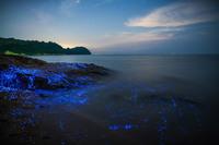 Волшебное свечение у берегов Японии