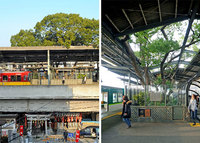 Японцы построили станцию вокруг 700-летнего дерева по одной жуткой причине