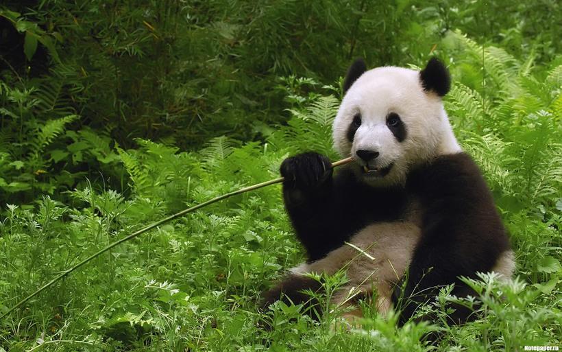 Самое интересное о Китае: факты, о которых вы не знали