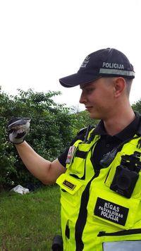 В Риге на должность младшего инспектора полиции взяли воробья