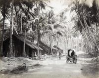 17 редких фотографий повседневной жизни Шри-Ланки в 1880-х годах