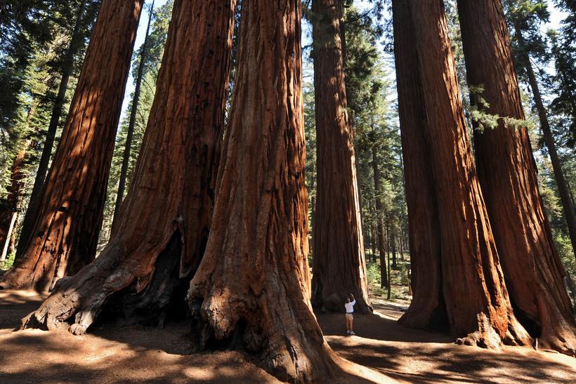 долина смерти Путешествие в Долину Смерти sequoia national park in central california