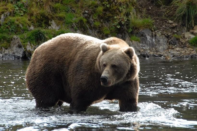 самые большие известные медведи фото маслоу