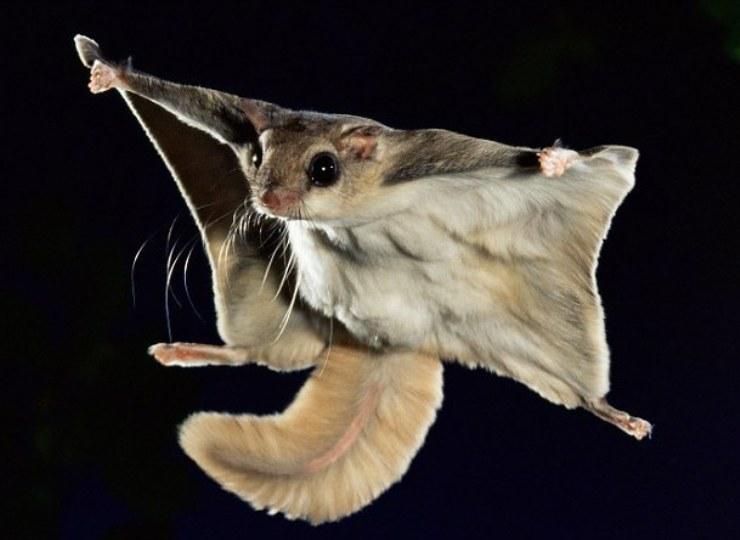 биткоинов фото белка летяга в полете относится