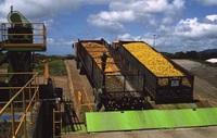 Как апельсиновая кожура помогла восстановлению леса в Коста-Рике