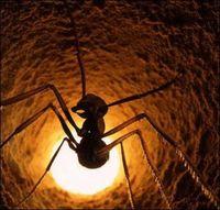 Половина муравьев в муравейнике — лентяи, которые тоже приносят пользу