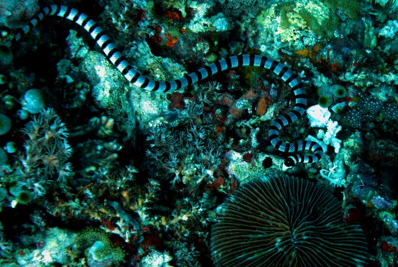 интенсивная эксплуатация морские змеи фото японского моря просторах