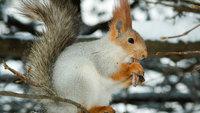 Подготовка диких животных к зиме