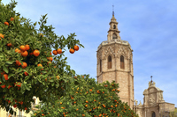 Повсюду растут апельсины, Валенсия