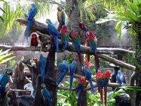 Пернатые, живущие в зоопарке
