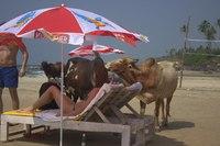 Туристы и не только. Пляжи ГОА