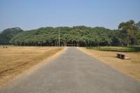 Великий баньян — лес из одного единственного дерева площадью 1,5 гектара
