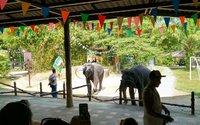 Сафари парк в феврале очень популярен у туристов