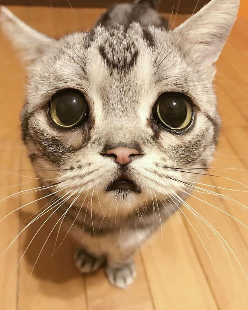 Картинки грустного кота, ржачные фото