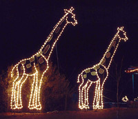 Zoo Lights в зоопарке Майами