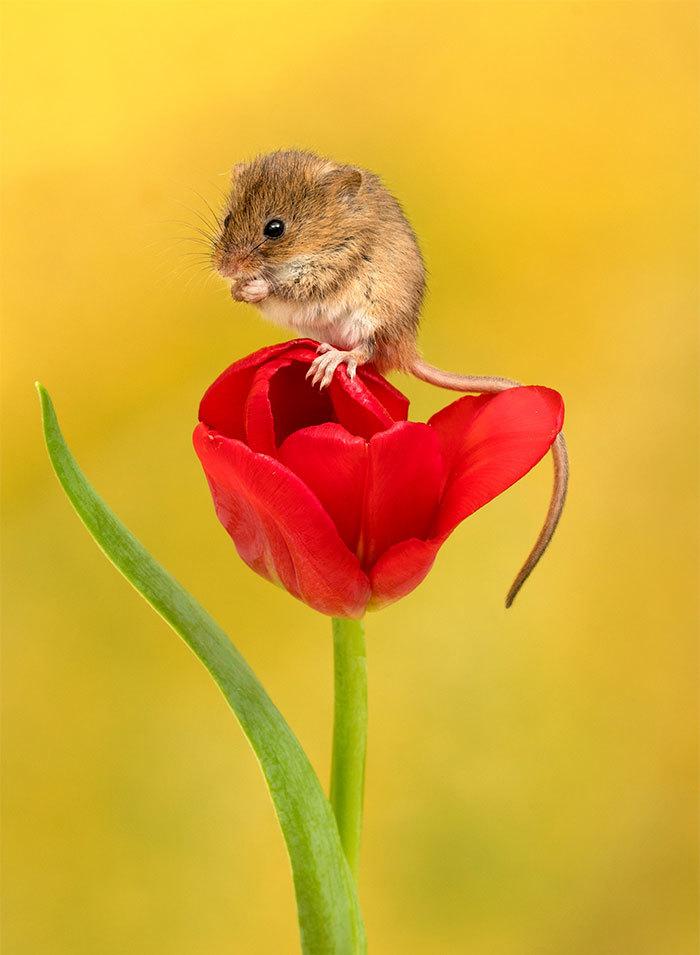 открытка мышка фото нас, хоть раз