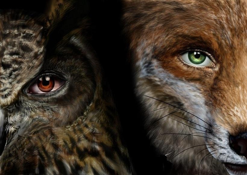Картинки словом, смешные картинки лиса и сова