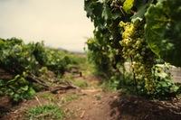 Тенерифе: гастрономия и вина