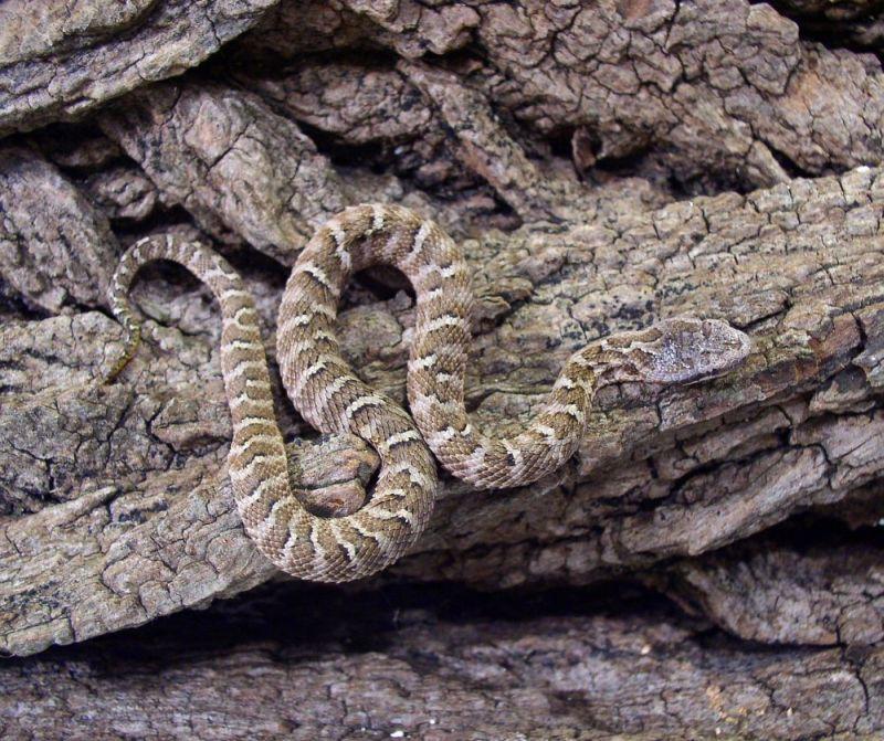 фото змей обитающих на дальнем востоке смог победить явившуюся