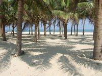 Дананг — это чистые пляжи с зелёными пальмами и белым песочком