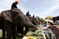 Поло на слонах, Таиланд