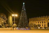 Новогодняя елка в Абхазии