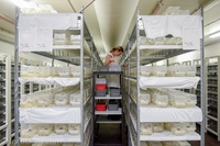 2 миллиона семей ежегодно: зачем ученые разводят шмелей в лабораториях