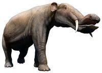 Четыре бивня и хобот в виде клюва: как выглядели древние предки слонов