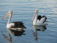 Птицы, живущие на озере, выглядят вполне довольными
