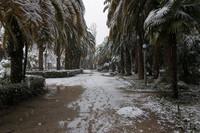 Пальмы и снег. Необычное сочетание
