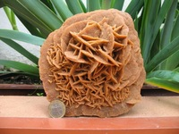 «Розы пустыни»: как в Сахаре образуются каменные цветы