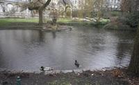 "Утиный пруд в парке ""Колоннада"". Пасмурно. Карловы Вары."