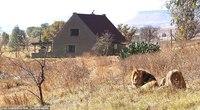 В Африке сдают дом, где можно пожить в окружении львов
