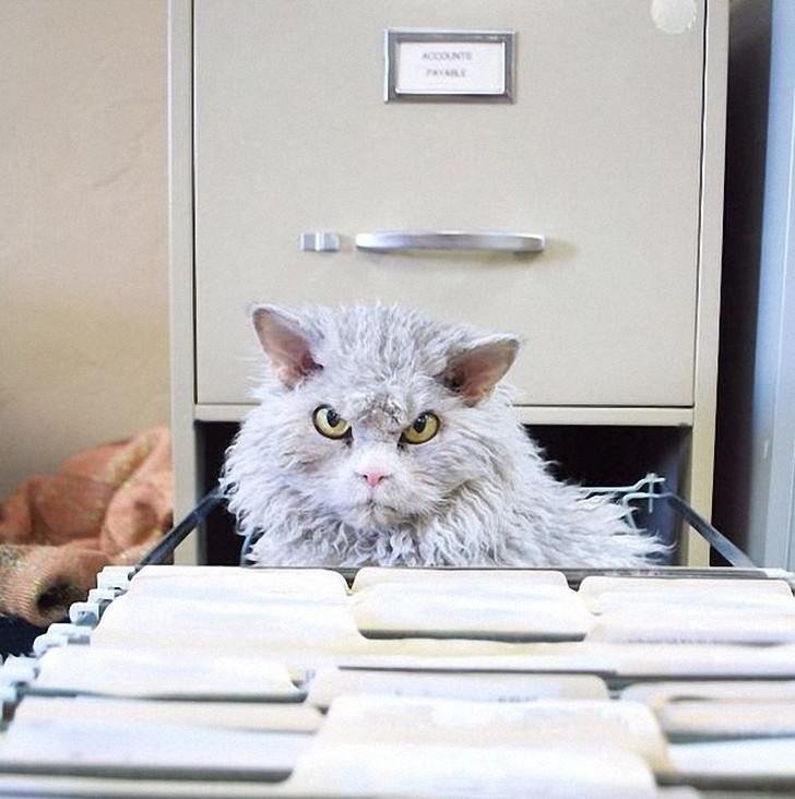 фото с котом про работу что