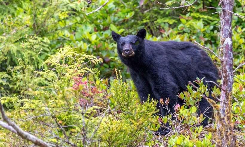 Трехлетнего мальчика, заблудившегося в лесу, спас медведь