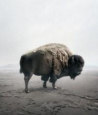 Медитативные коллажи: дикие животные в совершенной безмятежности