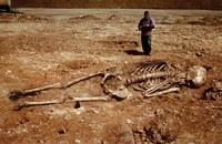 самый большой женский скелет