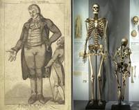 самый большой скелет