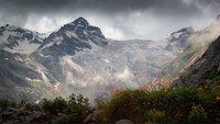 Флора горы Казбек