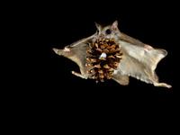 Белки-летяги светятся в темноте: для чего им такие способности
