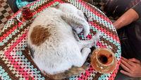 Американец снимает бездомных котов, и некоторые фото выглядят как постановочные