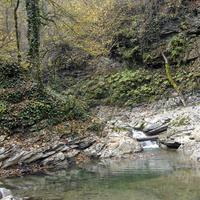 Небуг: экскурсия по многовековым лесам