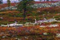 Фауна парка