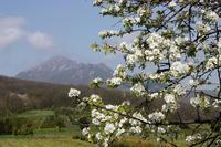Вот такая красота в Пятигорске в период цветения!