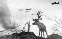 Милые армейские фото с животными, показывающие, что война затрагивает не только людей