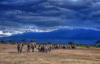 Слоны вблизи Килиманджаро